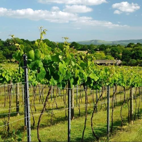 bolney-wine-estate-sleep-large